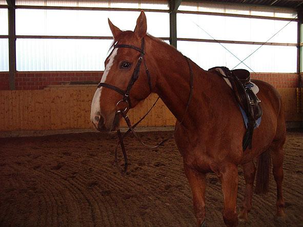 ausmalbilder pferde voltigieren  vorlagen zum ausmalen
