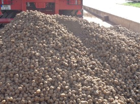 Kartoffeln3003