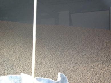 Kartoffeln3006