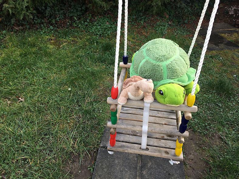 Schildkröten002