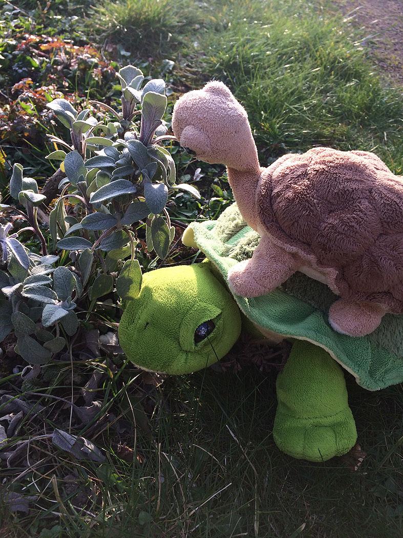 Schildkröten003