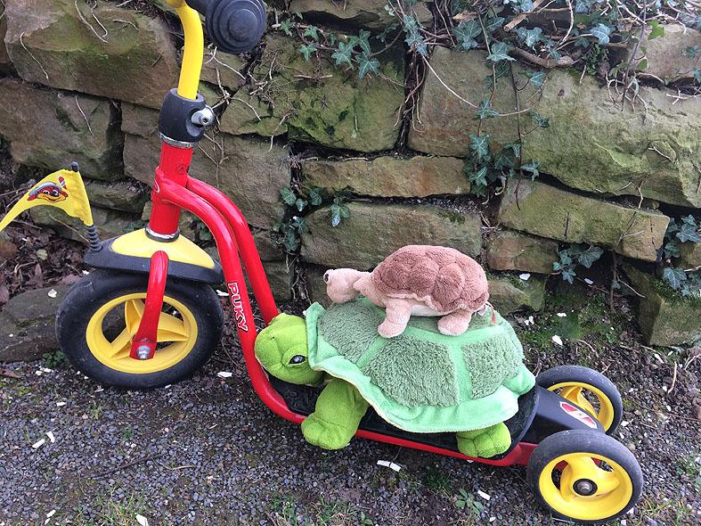 Schildkröten007