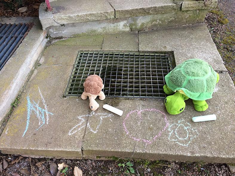 Schildkröten008